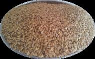EŁPOL Ryż paddy 1 kg